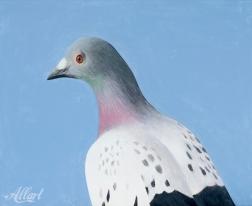 Duif / 40x50 / oil / 2018 / Jeroen Allart